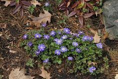 Spring bulbs. http://www.garden-design.me/spring-bulbs/