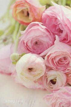 Spring+Ranunculus.jpg 400×600 pikseli