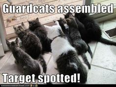 Guardcats assembled Target spotted!