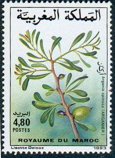 Argania spinosa, known as Argan . Royaume de Maroc stamp 1993
