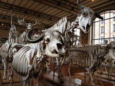 Musée d'Histoire Naturelle - Paris