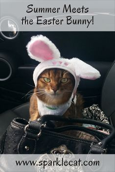 I met the Easter Bunny! In costume, yet! #cat #easter #easterbunny #catcostumes #funnycats #kitty