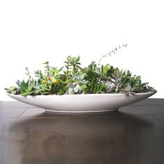 Modern Succulent Centerpiece #DotandBoDream