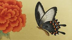 1. 제비나비의 날개에 회색 점을 찍는다. 호분 + 먹 점이 날개 끝으로 갈수록 흩날리도록 찍는다.  2. 먹 + 튜브 검정색을 섞어 회색 점이 너무 많은 곳에 찍어 수정한다. 날개의 회색 선 밑으로 검은 선을 그어 입체감을 표현한다. 날개 끝 (흰색이 있는 부분)에 가는 붓으로 선을 그려준다. 3. 더듬이와 다리, 몸통에 선을 그려준다. 제비나비 몸통 검정 바림 동영상  제비나비 다리 그리기 동영상  산호랑나비 다리 그리기 동..