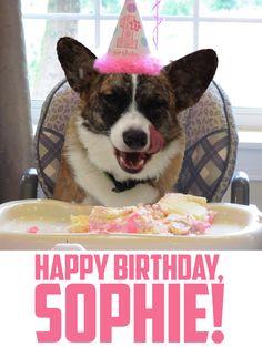 Happy Birthday, Sophie! #corgi
