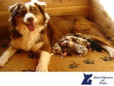 CLÍNICA VETERINARIA DEL BOSQUE. ¿A qué edad separamos a los cachorros de la madre y la camada? Es muy importante el desarrollo físico y emocional del cachorro, por ello debemos realizarlo entre las 8 y 10 semanas de edad, estando en el periodo de sociabilización. Te invitamos a visitar nuestra página www.veterinariadelbosque.com para conocer nuestros servicios.