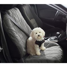 Pawslife Quilted Bucket Car Seat Cover In Grey - Never again deal with the hassle of cleaning mud, dirt, drool, grime, dander and pet hair on your car's backseat with these water- and stain-repellant Pawslife Bucket Car Seat Cover. Aussie Puppies, Havanese Puppies, Cute Puppies, Dogs And Puppies, Yorkies, Puppies Tips, Teacup Puppies, Pomeranian Puppy, Chihuahuas