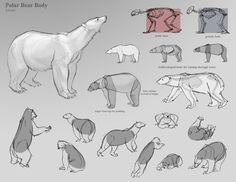 I did these for my animal drawing final, but I figured they might be useful for someone here. YEY BEARS.