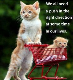 We all need a push in the right direction at some point in our lives.
