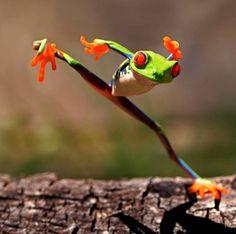 Les grenouilles font aussi du karaté, si si.