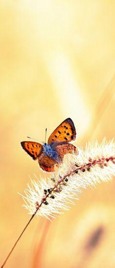 butterfly bliss...