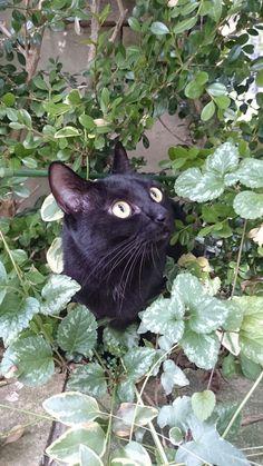 My name is Jiji lives in Tokyo. Black cat.