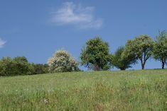 wandern durch den Naturpark und den Frühling genießen Country Roads, Plants, Cottage House, Hiking, Plant, Planets