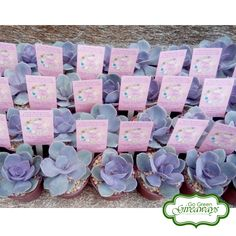 Perle von Nurnberg PVN succulents wedding favors for Mark & Jazel - Pampanga Wedding