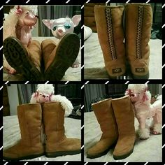 Uggs Chestnut uggs with Tasman braids in great condition. UGG Shoes