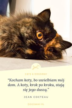 Happy Animals, Animals And Pets, Pet Sitter, All About Cats, Dom, Movies, Movie Posters, Cats, Pets