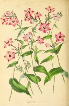 Paxton's magazine of botany, and register of fl...