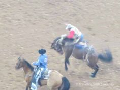 The Houston Livestock Show and Rodeo