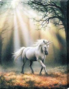 Glimpse of a Unicorn Canvas Print - Anne Stokes