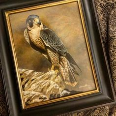 Peregrine Falcon watercolor on board with sterling silver Rebecca Latham arriving today for the exhibition at Seaside Art Gallery in #NC #obx #wildlife #watercolor #art #animal #painting #miniature #artist #miniatureart #realism #animallovers #falconry #falcon #falcons #peregrine #birdsofprey #raptor #birds #birdlovers #silver #naturalism