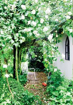 Backyard with elegant and white climbing roses. See the rest of the poetic garden here.