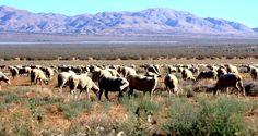 Sheep against the Tehachapi mountains. [5184x3456][OC] - http://ift.tt/2fZ8WEH