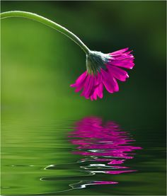 pink flower green water.  I love pink and green