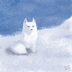 Arctic Fox by Richard Adenot for Sketch Dailies