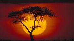 La puesta de sol en una sabana.