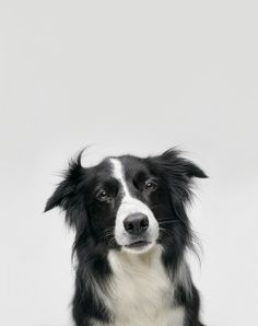 http://voices.nationalgeographic.com/files/2014/04/dog-brains-humans-01.jpg