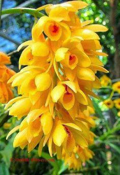 Just beautiful yellow flowers