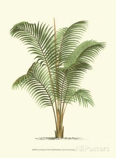 Antique French Palm Tree Plate 37 1878 Botanical 8 X 10