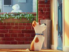 Em 'Pets: A Vida Secreta dos Bichos', cães e gatos vivem todo o dia sem os…