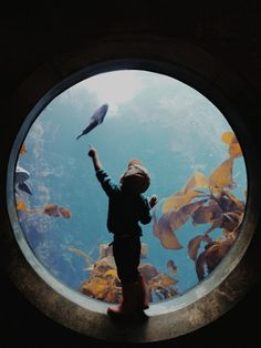 aquariums and silhouettes make for the best pictures