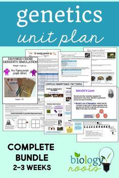 Big Bang Theory Punnett Square Worksheet | LLC Middle School ...