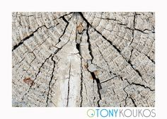 wood, woodgrain, tree, log, rings, texture, crackled