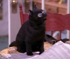 bahahaha love Salem from Sabrina the Teenage Witch :)