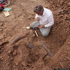 Not one, not two, but the remains of potentially three Triceratops have been unearthed near Newcastle, Wyo. -- and one just may be the most complete skeleton ever found of the horned dinosaur. Wow.