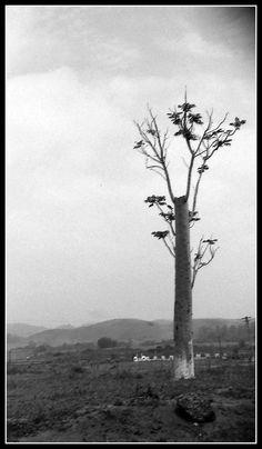 Árvore cortada