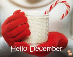 Winter drink ideas like hot cocoa, cider, and more are amazing for cold winter evenings! Check out our ideas and recipes here! Beautiful Christmas Cards, Christmas Holidays, Frog Design, Hello December, Winter Drinks, Blank Cards, Card Sizes, Cocoa, Seasons