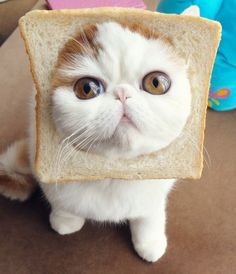 Yes, I'm another inbred cat.