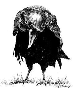 "What""cha lookin' at Corvidae.....?? ""Crow Stare"" by Simon Adams: Artist / Illustrator"