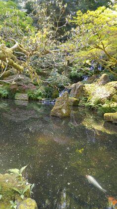 Japanese Gardens, Portland Or.