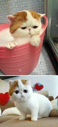 Rub-a-dub-dub Cat in a tub  :)