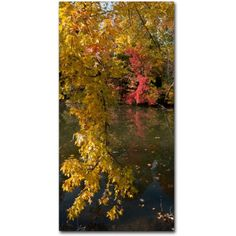 Trademark Fine Art Reds and Yellows of Autumn Canvas Art by Kurt Shaffer, Size: 10 x 19, Multicolor