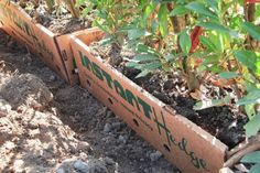 Need a privacy hedge right away? These are the best fast-growing privacy hedges that you can plant to achieve a tall, dense hedge very quickly. Privacy Hedges Fast Growing, Fast Growing Hedge, Fast Growing Evergreens, Hedges Landscaping, Landscaping Along Fence, Backyard Landscaping, Landscaping Design, Backyard Patio, Hedging Plants