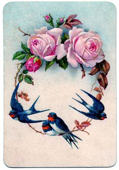antique images of birds | ... Fairy LLC*: Vintage Graphic - Stunning Swallow Birds with Pink Roses
