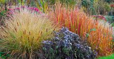 Nicht nur die Blätter von Ahorn, Felsenbirne und Co. präsentieren sich im Herbst in den leuchtendsten Farben – auch einige Ziergräsern begeistern mit ihrem farbenfrohen Laub. Wir stellen Ihnen die schönsten vor.