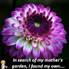 Inspirational Flower Photos - My mother's garden  see more:  thegardeningcook.com/inspirational-flower-photos/