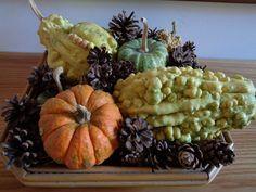 Composizione con zucche e pigne  Foto-diario di una giardiniera curiosa